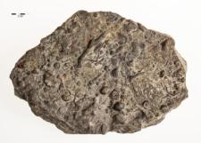Retzia cuneata