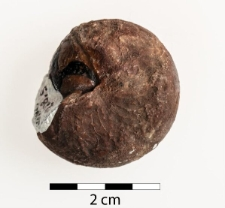 Aganides (Brancoceras) sulcatus Mstr.