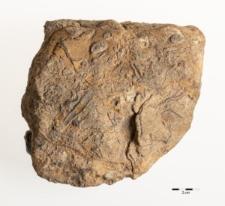 Archaeocyatha