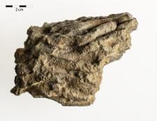 Disphyllum caespitosum Goldfuss 1826