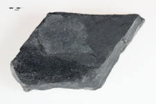 Palaeoniscidae