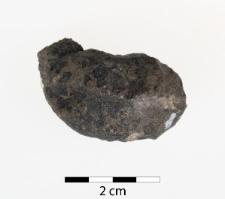 Trigonocarpum noeggerathii (Sternb.) Brongn.