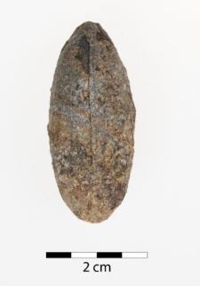 Trigonocarpus schulzianus Goepp. et Berg.
