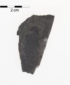 Neuropteris gigantea Sternberg