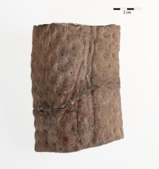 Stigmaria ficoides Brongniart