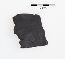 Monograptus discus Törnquist