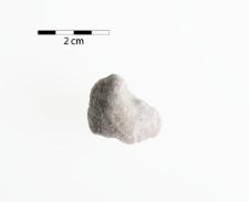 Megalodus triqueter Wulf. mut. dolomitica Frech
