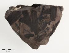 Dictyopteris brongniartii Gutb. syn Linopteris gutbieriana