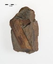 Archaeocalamites riadatus Sternb.