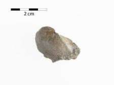 Parallelodon lacordaireanus de Kon.