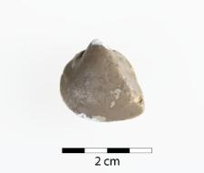 Neoschizodus laevigatus Ziethen 1830