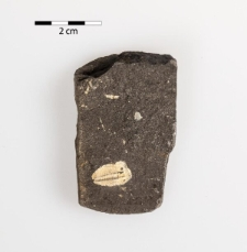 Aulacopleura konincki (Barrande 1846)