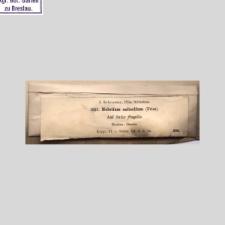 Helotium salicellum