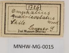 Omphalius qadricostatus