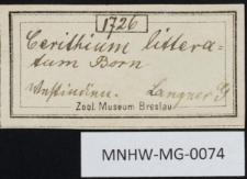 Cerithium litteratum