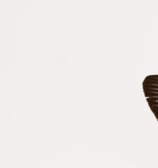 Atrophaneura polydorus novobritannicus (Rothschild, 1895)