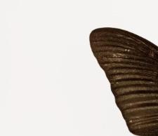 Papilio bianor takasago Nakahara & Esaki, 1930