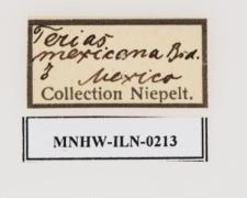 Eurema mexicana (Boisduval, 1836)