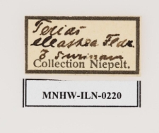 Eurema elathea (Cramer, 1777)