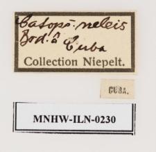 Aphrissa neleis (Boisduval, 1836)