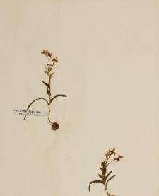 Lapeirousia fissifolia