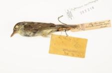 Phylloscopus xanthodryas