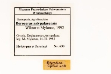 Deroceras astypalaeensis Wiktor, Mylonas,1992