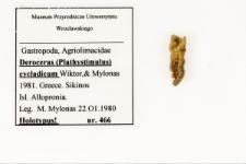 Deroceras (Plathystimulus) cycladicum Wiktor, Mylonas, 1981