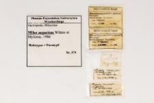 Milax aegaeicus Wiktor, Mylonas, 1986