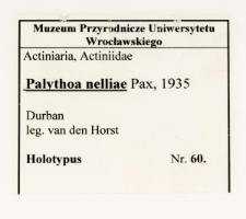Palythoa nelliae Pax, 1935