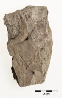 Alnus julianiformis (Sternberg) Kvaček & Holý