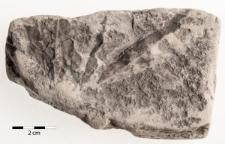 Debeya (Dewalquea) haldemiana (Debey ex Saporta et Marion 1873) Halamski 2013
