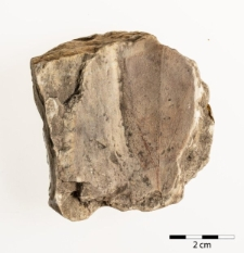 Cinnamomum scheuchzeri Heer