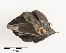 Calophyllum profundum (Geinitz 1842)