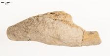 Rosarichnoides sudeticus