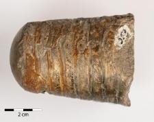 Belemnites giganteus Schloth.