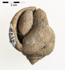 Cassis saburon