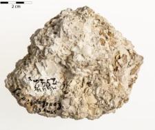 Cardium lithopodolicum Du Bois de Montper